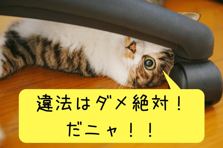 違法はダメ!とこちらを見つめる猫