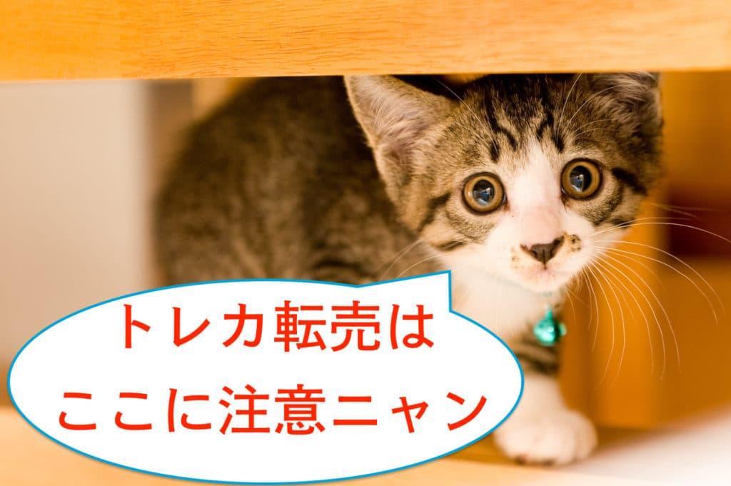 トレカ転売を注意する猫
