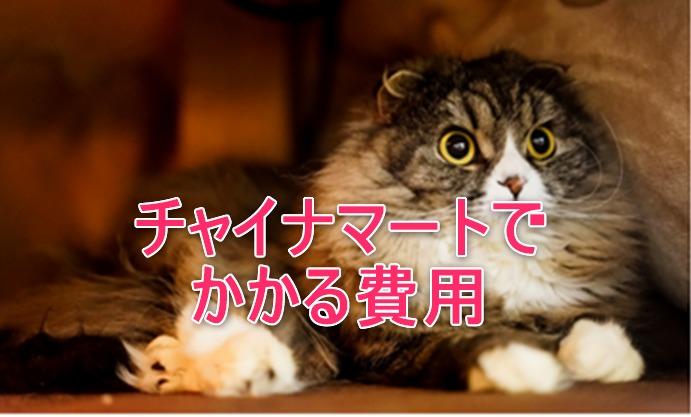 びっくりした顔の猫